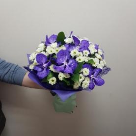 9 Орхидей Ванда И Сантини фото