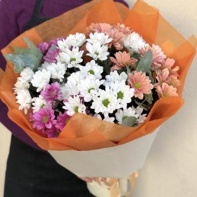 9 Разноцветных Кустовых Хризантем фото