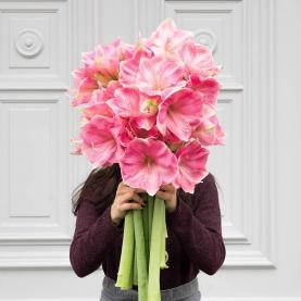 9 Розовых Амариллисов фото