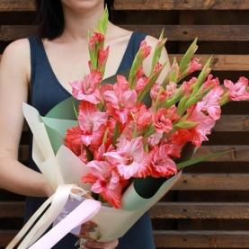 9 Розовых Гладиолусов фото