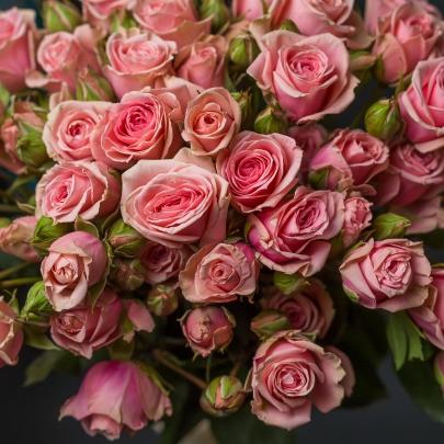 9 Розовых Роз Кустовых фото