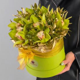 9 Зеленых Орхидей в коробке фото