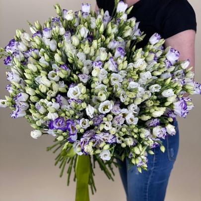 101 Бело-Фиолетовая Эустома фото