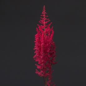 Астильба Розовая фото
