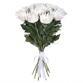 11 Белых Хризантем фото
