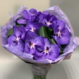 9 Орхидей Ванда фото