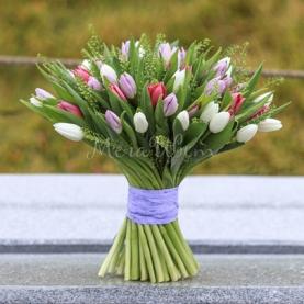 51 Тюльпан Разноцветный фото