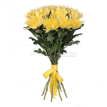 11 Желтых Хризантем фото