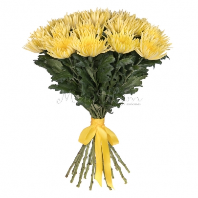 21 Желтая Хризантема  фото