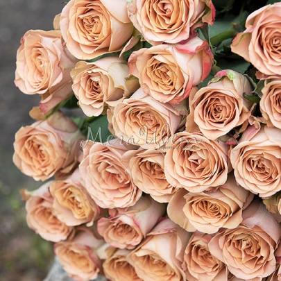 51 Кофейная Роза (70/80 см.) фото