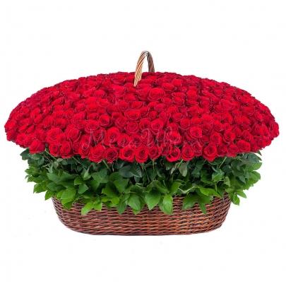 1001 Красная Роза фото