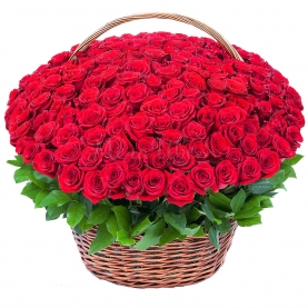 251 Красная Роза в корзине фото