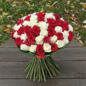 65 Бело-Красных Роз Эквадор (50/60 см.) фото