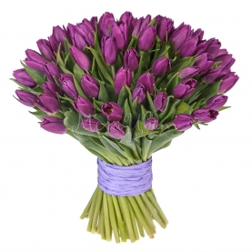 51 Фиолетовых Тюльпанов фото