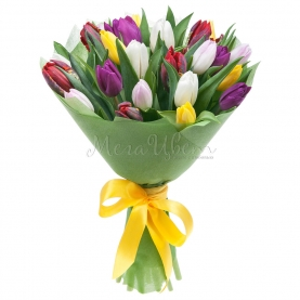 25 Тюльпанов микс фото
