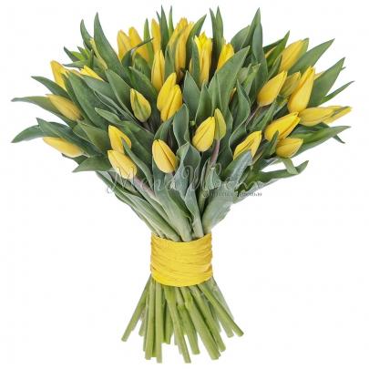 51 Желтый Тюльпан  фото