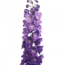 Дельфиниум Фиолетовый фото