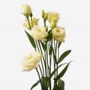 Эустома (Rosita Yellow)