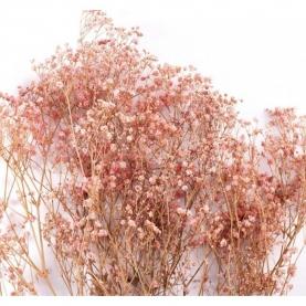 Гипсофила Бледно-Розовая фото