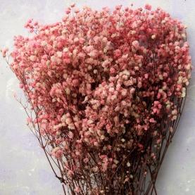 Гипсофила Розовая фото