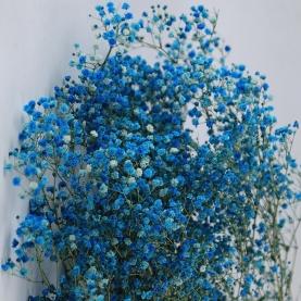 Гипсофила Синяя фото