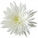Хризантема (Анастасия)