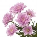 Хризантема Кустовая Baltica Pink