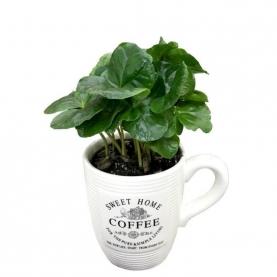 Кофе Арабика в чашке 9/20 фото