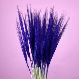 Колосья Синие фото