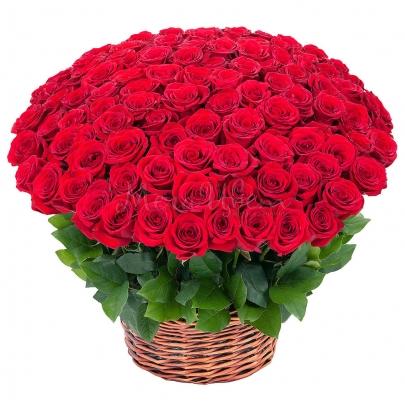 151 Красная Роза Premium в корзине (60 см.) фото
