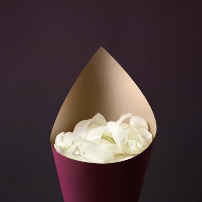Лепестки Роз белые фото