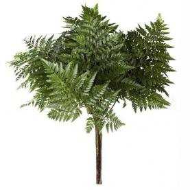 Листья папоротника фото