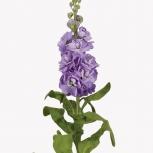 Маттиола (Anytime Lavender)