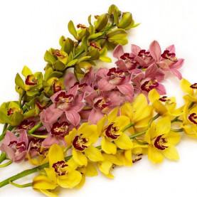 Орхидея Цимбидиум Микс (ветка) фото