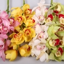 Орхидея (Mix)