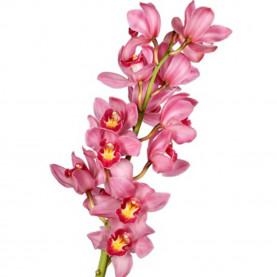 Орхидея Цимбидиум Розовая (ветка) фото
