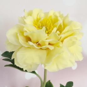 Пион Желтый фото