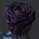 Роза (Artificial)
