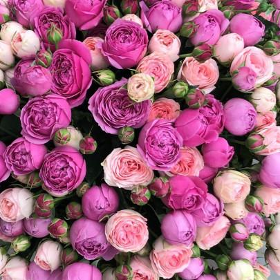 Роза Кустовая Пионовидная Микс (50 см.) фото