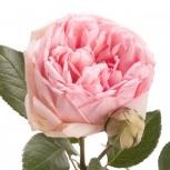 Роза (Charming Piano)