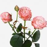 Роза (Madam Bombastic)