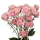 Роза кустовая (Sweet Sensation)
