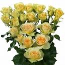 Роза Кустовая Желто-Лимонная (30-40 см.)