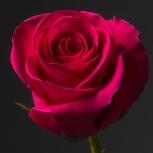 Роза Малиновая (Pink Floyd)
