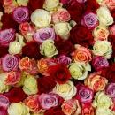 Роза Mix (60 см.)