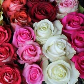 Роза Mix (50 см.) фото