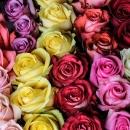 Роза Mix (30-40 см.)