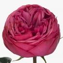 Роза (Pink Piano)