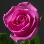 Роза (Heidi)