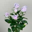 Роза Сиреневая Кустовая (Ocean Song)